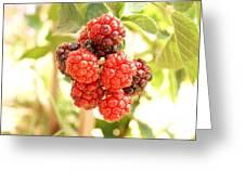 Blackberries Ripening Greeting Card