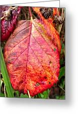 Blackberry Leaf In The Fall 3 Greeting Card