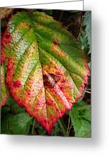 Blackberry Leaf In The Fall 4 Greeting Card