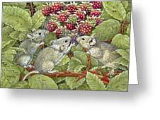 Blackberrying Greeting Card