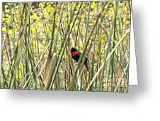 Blackbird In Reeds Greeting Card