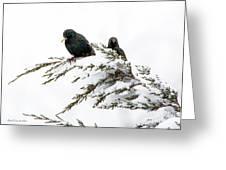 Blackbirds In Snow Greeting Card