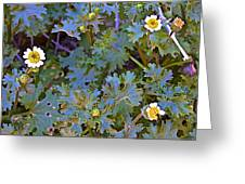 White Wooly Daisies On Borrego Palm Canyon Trail In Anza-borrego Desert State Park-ca Greeting Card