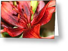 Blackout Asiatic Lily Greeting Card