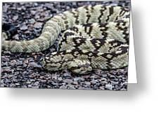 Blacktailed Rattlesnake Greeting Card
