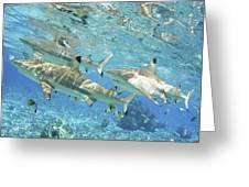 Blacktip Reef Shark Greeting Card