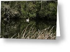 Blackwater River Pelican Greeting Card