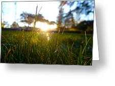 Blades Of Grassy Light Greeting Card