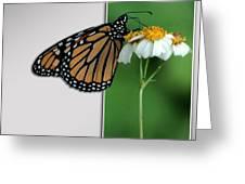Blank Greeting Card 5 Greeting Card