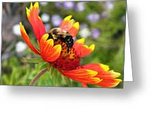Blanket Flower And Bumblebee Greeting Card