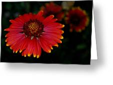 Blanket Flower I  Greeting Card