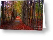 Blanket Of Red Leaves Greeting Card