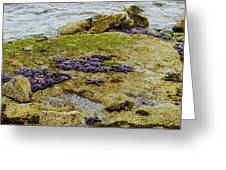 Blanket Of Seastars Greeting Card