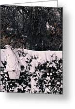 Blanketed Creepers Greeting Card