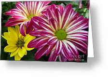 Blast Of Colors Greeting Card