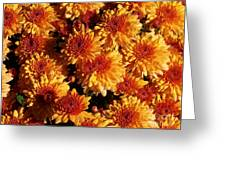Blaze Of Flowers Greeting Card