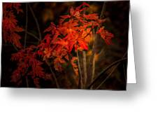 Blaze Of Leaves Greeting Card