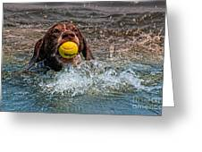 Blaze Retrieving Wilson 3 Greeting Card
