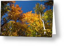 Blazing Autumn Colors - Just Lift Your Head Greeting Card