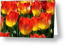 Blazing Color Greeting Card