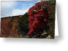 Blazing Maple Tree Greeting Card