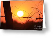 Blazing Orange Fence Line Sunset Greeting Card