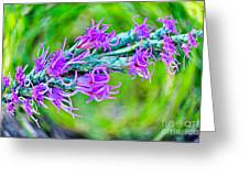 Blazing Star Greeting Card