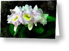 Blc Mary Ellen Underwood Krull-smith Greeting Card