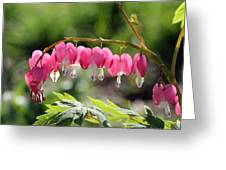 Bleeding Heart Flower Greeting Card by James Hammen