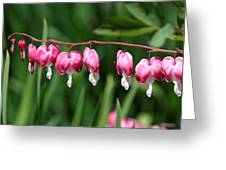 Bleeding Hearts All In A Row Greeting Card