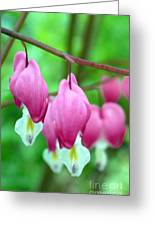 Bleeding Hearts Flowers Greeting Card