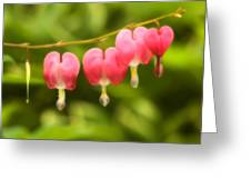 Bleeding Hearts Greeting Card