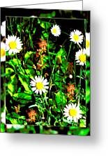 Blended Daisies Greeting Card