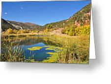 Beauty In Colorado Greeting Card