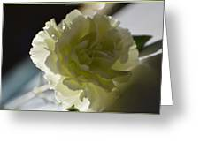 Blissful White Greeting Card