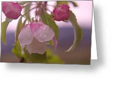 Blomming In The Rain Greeting Card