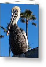 Blond Pelican Greeting Card