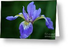 Blood Iris Greeting Card