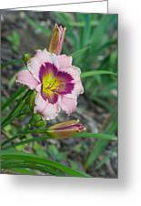 Blood Throated Lily 1 Greeting Card