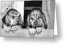 Bloodhound Puppies Dog Portrait  Greeting Card