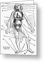 Bloodletting Chart, 1517 Greeting Card