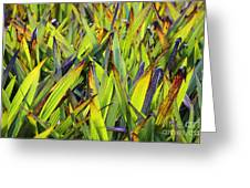 Bloodroot Abstract Greeting Card