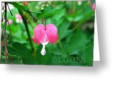 Bloom Bleeding Heart Greeting Card