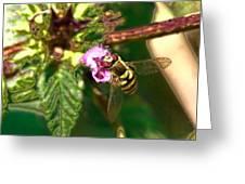 Bloom-fly  Leif Sohlman Greeting Card