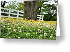 Bloom Gathering Greeting Card by Beverly Hammond