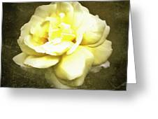 Bloom In Full Greeting Card by Cathie Tyler