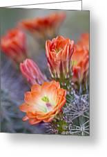 Bloom In Orange Greeting Card