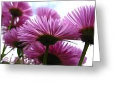 Bloom Pink Daisies Greeting Card