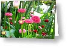 Bloom Pink English Daisies Greeting Card