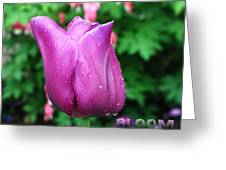 Bloom Tulip After Rain Greeting Card